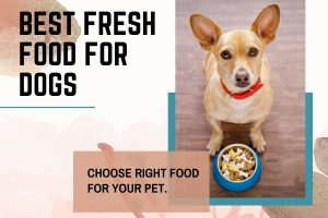 Best Fresh Food For Dogs