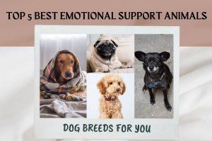 Best Dog Breeds