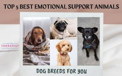 Top 5 Best Emotional Support Animals Dog Breeds for You
