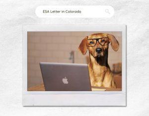 ESA Letter in Colorado